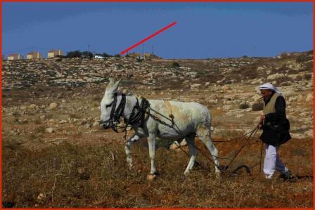 Mohammed och hans åsna plöjer.
