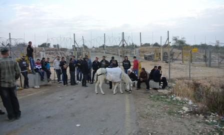 Palestinier som väntar vid jordbruksgrinden.