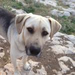 Hunden som Lennart Molin gett namnet Lennart