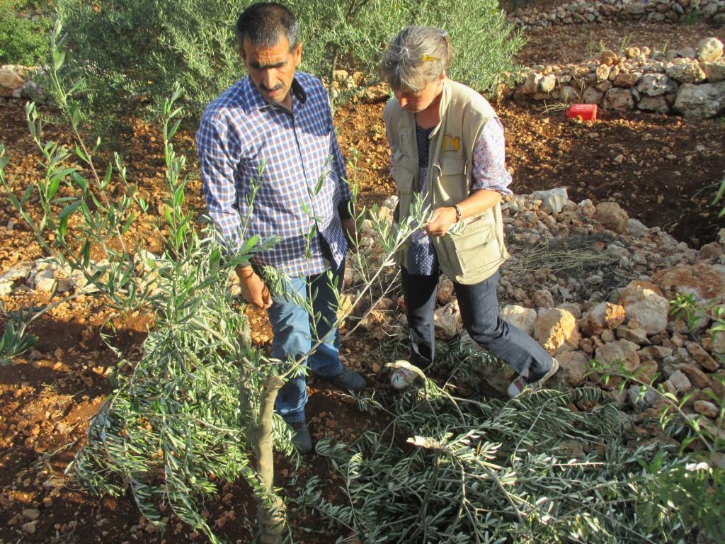 Mohammad Sabateen visar Görel Råsmark hur bosättare skadat hans träd i byn Husan.