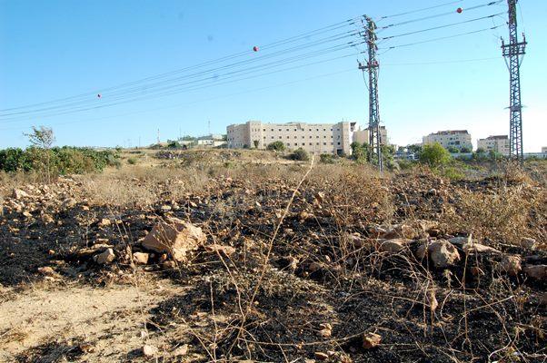 Den brända olivodlingen framför den israeliska bosättningen Betar Illit.