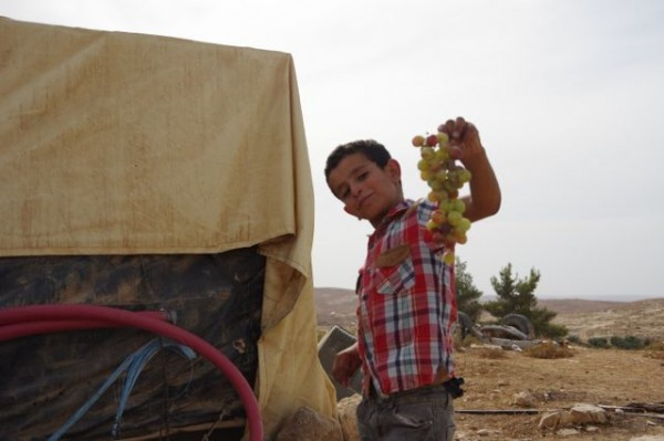 Mahmoud Nawaja med en klase vindruvor. Foto: Britt-Mari Sagefors