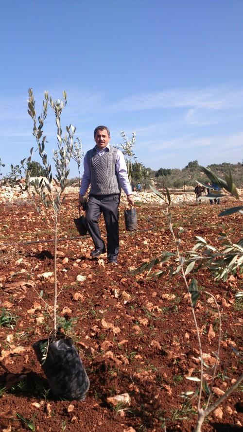Hassan i färd med att plantera olivträd