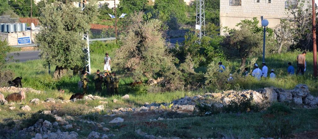 Familjen Jabaris får som betar i Wadi Al-Hussein-dalen, bland israeliska bosättare och militär.