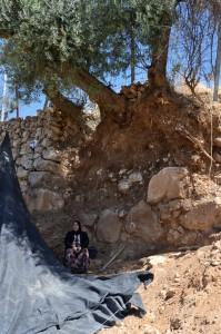 Faryal Abu Haikal sitter under muren och olivträdet hon försöker rädda.