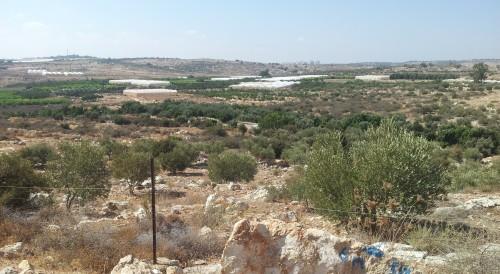 Abu Azzams (och flera andras) mark i sömzonen. Gröna linjen, som är den internationellt erkända gränsen för Israel, börjar inte förrän vid horisonten.