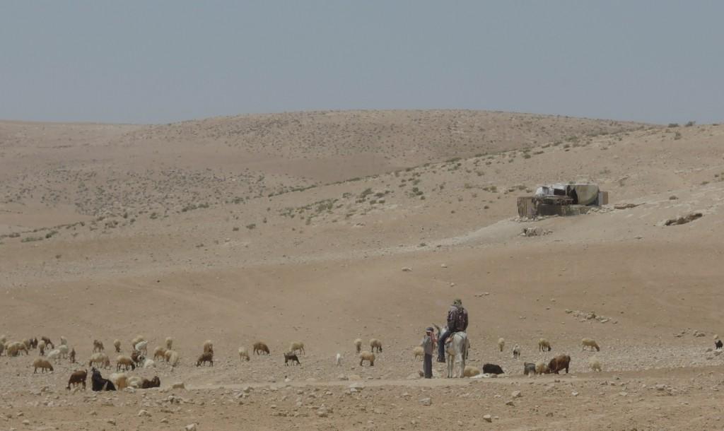 Fåraherde i Masafer Yatta (Firing Zone 918)