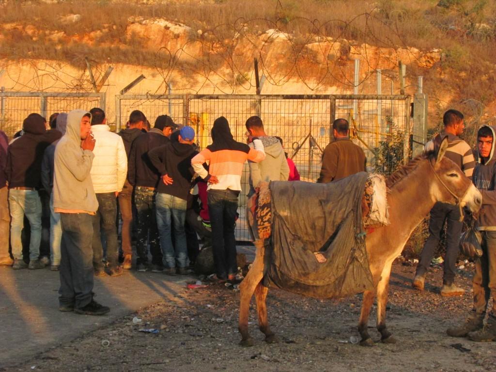 Många trängs för att passera jordbruksgrinden i Qaffin alldeles vid soluppgången.