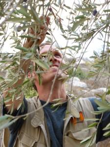 Samuel Skånberg plockar oliver.