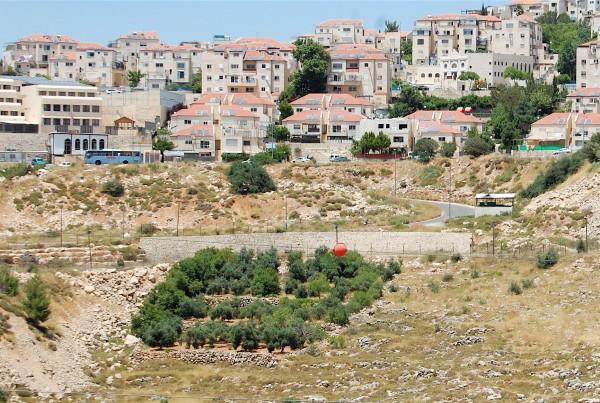31_5_2015-Betar-Illit-Nahhalin-Bethlehem-Palestinian-Olive-trees-in-front-of-settlement-fence-Photo-H-Jonsson-EAPPI
