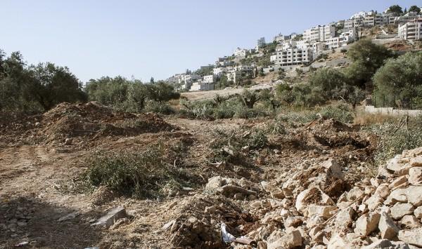 Marken i Bir Onah där de gamla olivträden dragits upp. Här ska muren dras.