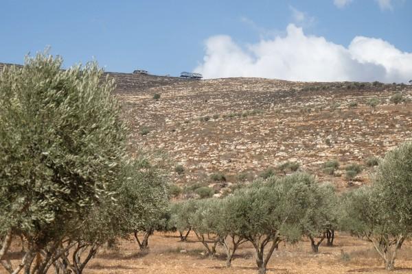 Ovanför olivträden runt nedre Yanoun ses ytterligare en ny konstruktion vid en illegal utpost. Foto: Erik Svanberg.