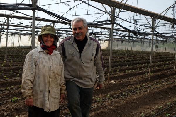 Fayez och Mouna Tanib i ett av sina växthus på den ekologiska odlingen i Tulkarem. Foto: Erik Svanberg.