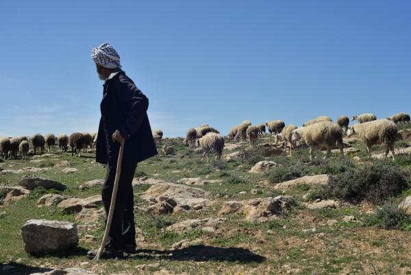 Abu Tariq vallar sina får. Foto: William Ek-Uvelius