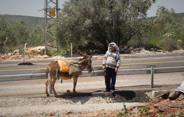 En bonde står med sin åsna bredvid vägen och det metallstaket som hindrar honom att ta med sin åsna till sin mark på andra sidan vägen. Foto: EAPPI/M Andrén