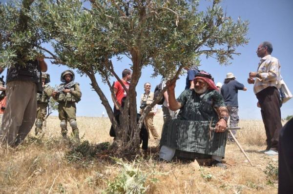 En av bönderna vilar i skuggan av ett olivträd. Runt honom är soldater och närvaron av olika fredsorganisationer. Fotot: Petra Ludwig