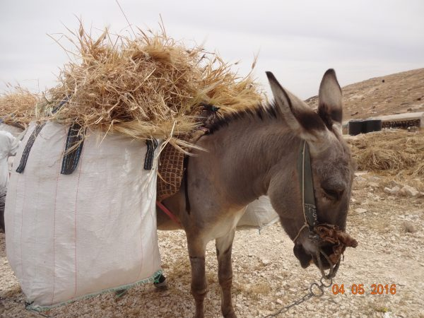 Nöjd åsna med en del av skörden bärgad. Foto: Maria Kileby